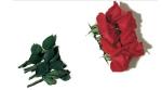L'ANM ricorda tutte le vittime del terrorismo e delle stragi -