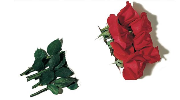 bandiera-italia-rose-giornata-memoria.jpg